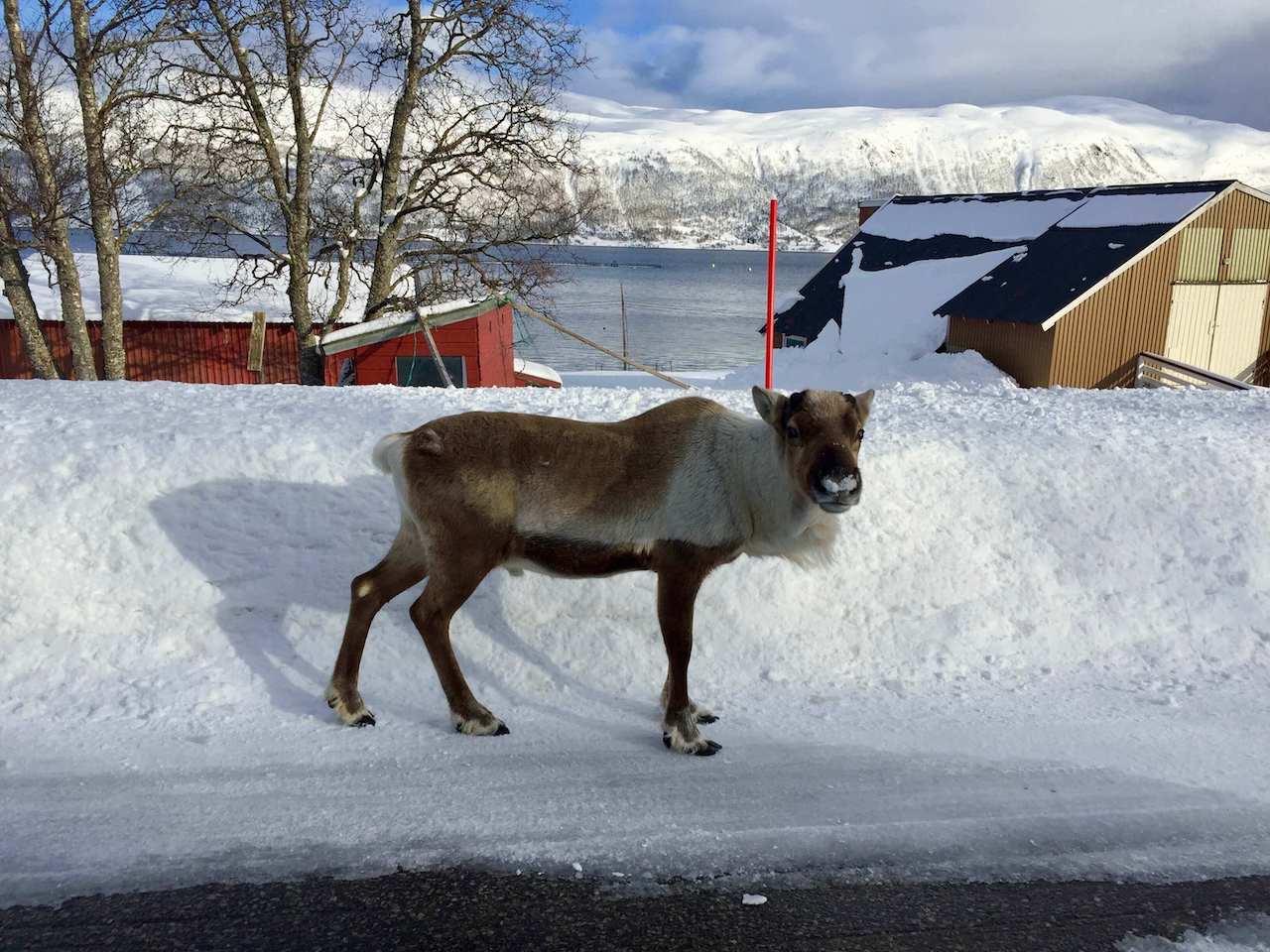 Norway, Elsfjorden